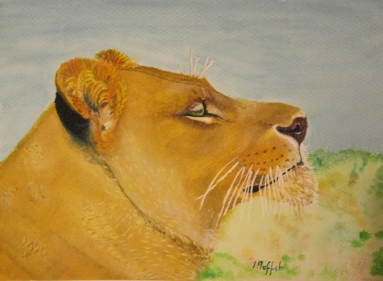 Lioness - Watercolours