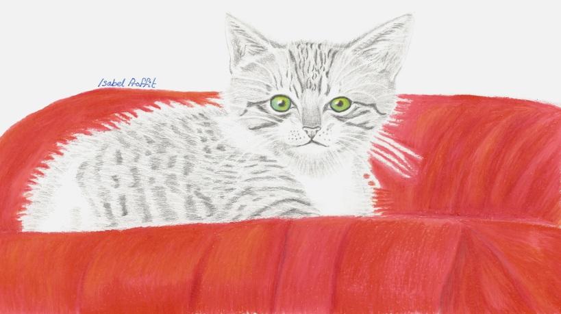 kitten better scan