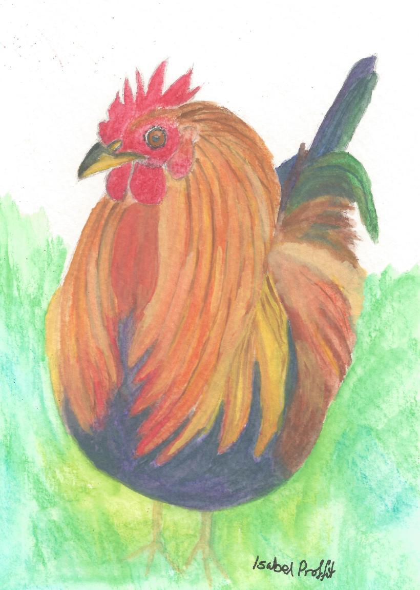 cockerel 2