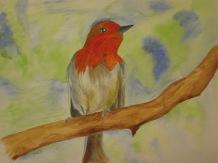Watercolour robin